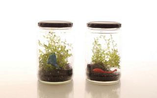 DIY สวนขวดสวยใบจิ๋ว (Terrarium)